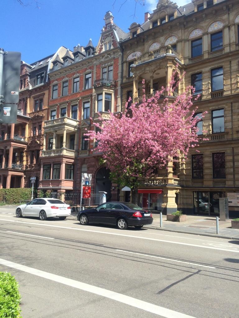 Blühender Baum Bahnhofstraße Wiesbaden