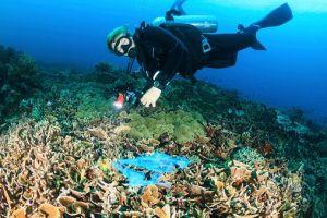 Sogar in Korallenriffs liegen Plastiktüten rum. Foto: Thinkstock