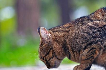 Der Unbekannte hat die Katze zwischen Montag und Dienstag dieser Woche angeschossen. Sie verlor ein Auge. Symbolfoto: Thinkstock
