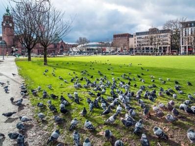 Tauben-Störer sollen am Hauptbahnhof ihr Unwesen treiben. Symbolfoto: Thinkstock