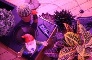 Sprechende Pflanzen als Kunstwerk: ...how will you conduct yourself in the company of trees, 2015 Arduino, Mikrofonkabel, Lautspre- cher, Verstärker, Trippytrees, Pflanzenbeleuchtung Foto: Courtsey und © The Artist