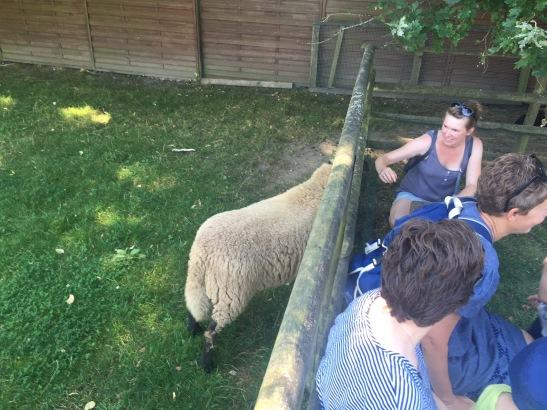 ...Schafe und Wollwerkstatt...